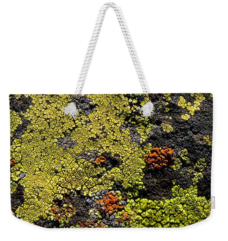 Abstract Weekender Tote Bag featuring the photograph Green Algea by Sean Wray