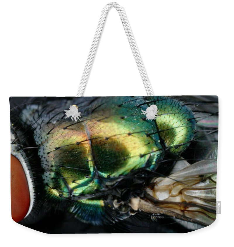 Blow Fly Weekender Tote Bag featuring the photograph Green Blow Fly by Ted Kinsman