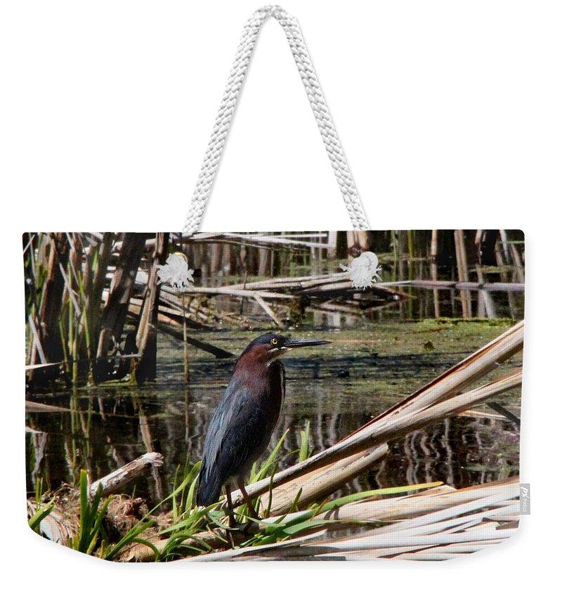 Bird Weekender Tote Bag featuring the photograph Green Heron by Davandra Cribbie
