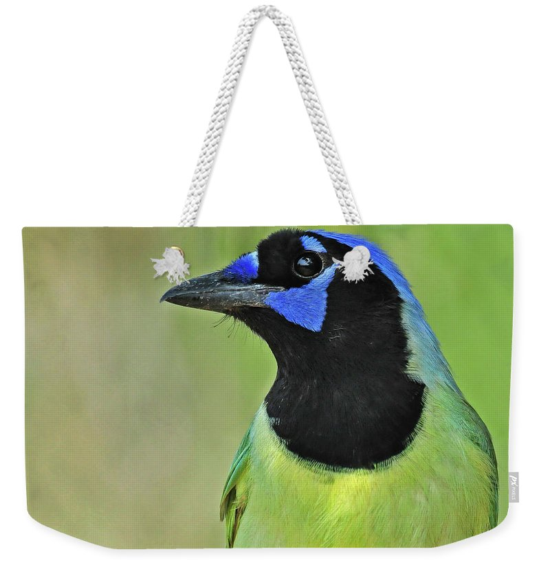 Green Jay Weekender Tote Bag featuring the photograph Green Jay Portrait by Dave Mills