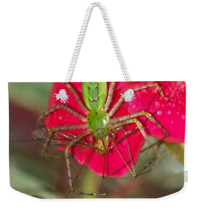 America Weekender Tote Bag featuring the photograph Green Lynx And Pray 8625 3375 by Michael Peychich