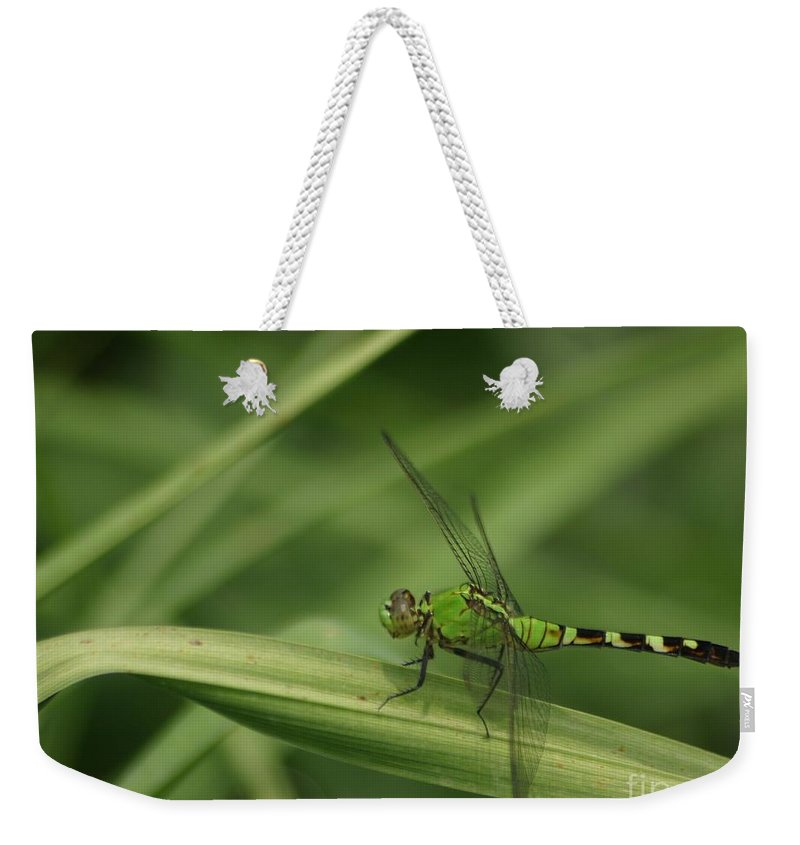 Dragonfly Weekender Tote Bag featuring the photograph Green On Green by Living Color Photography Lorraine Lynch
