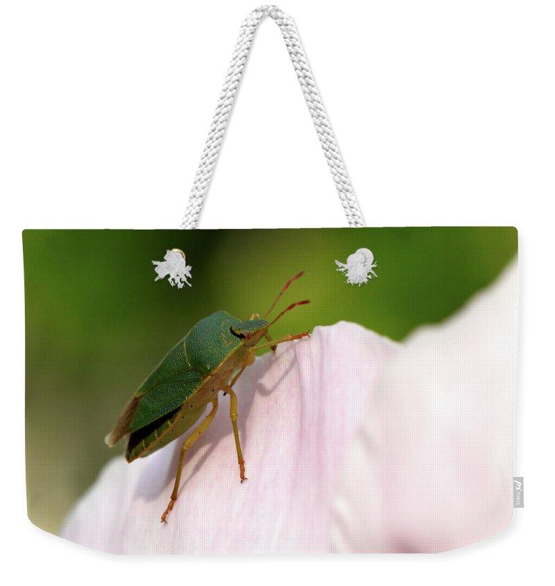 Jouko Lehto Weekender Tote Bag featuring the photograph Green Shieldbug 2 by Jouko Lehto