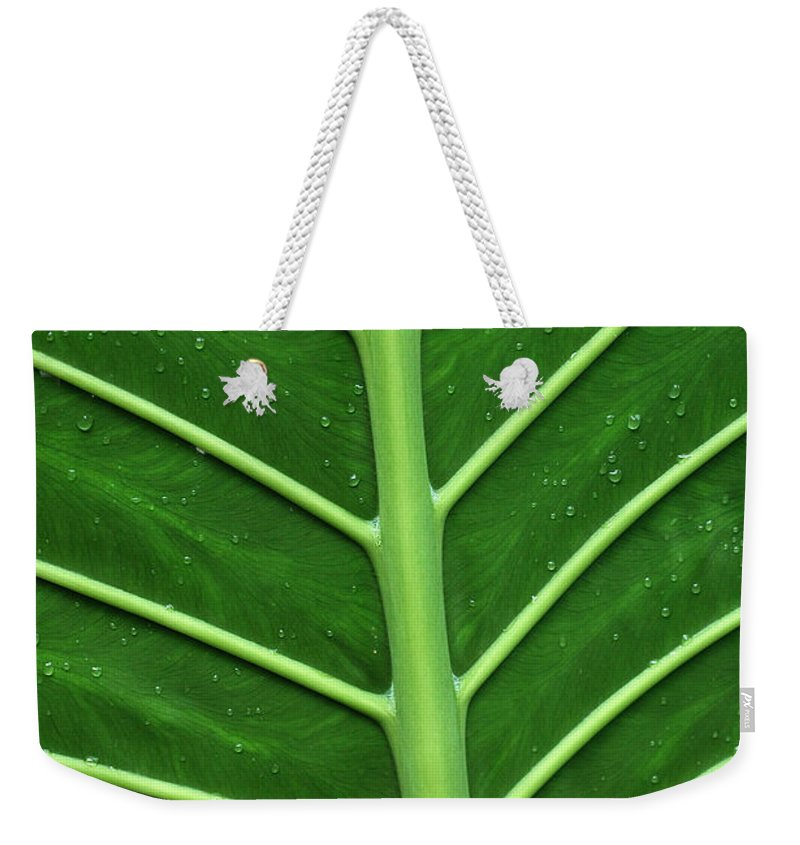 Green Weekender Tote Bag featuring the photograph Green Veiny Leaf 1 by Mike Nellums