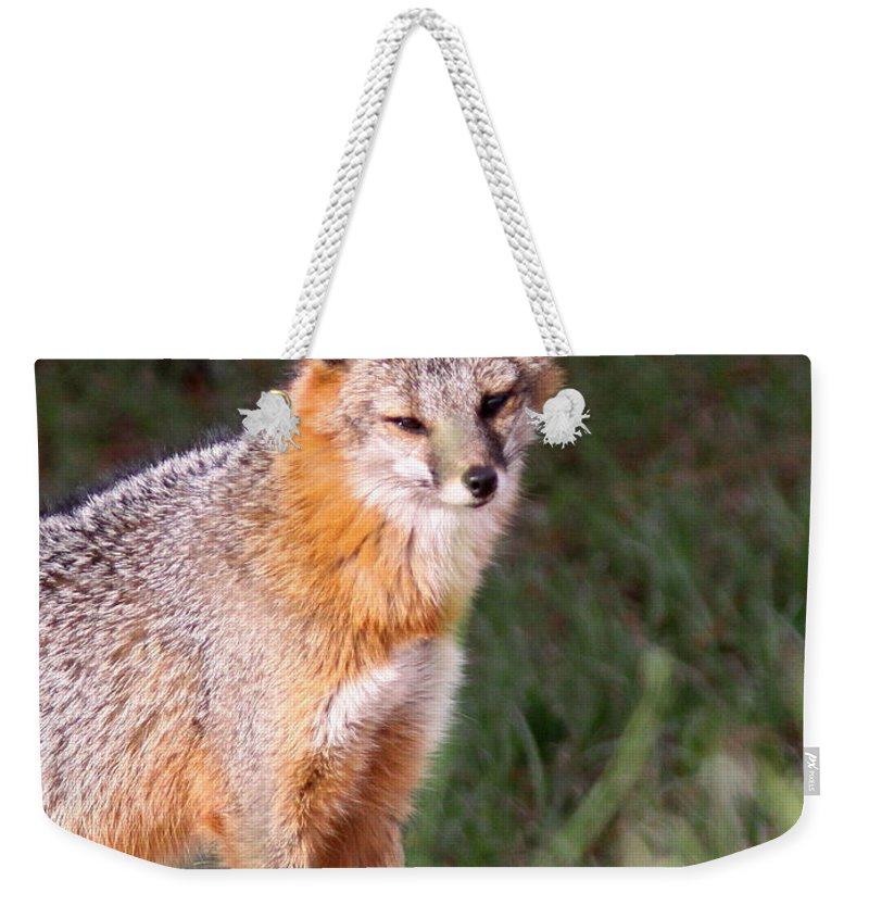 Grey Fox Weekender Tote Bag featuring the photograph Grey Fox - Vantage Point by Travis Truelove