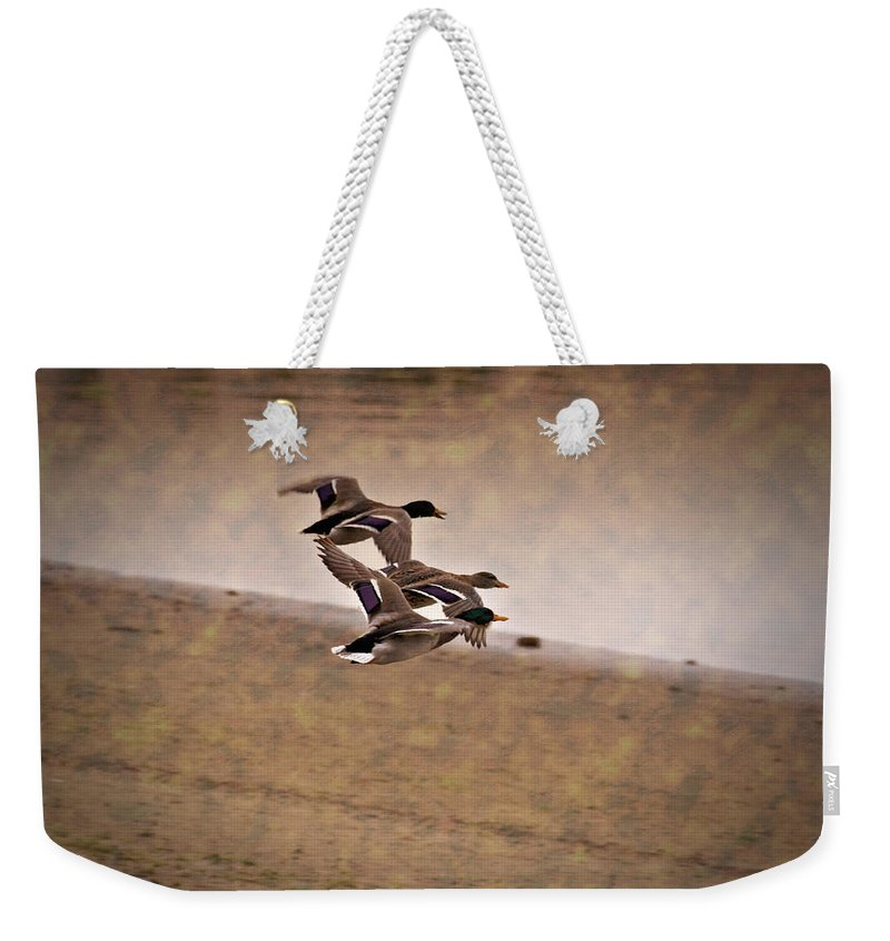 Ducks In Flight Weekender Tote Bag featuring the photograph Grouping V1 by Douglas Barnard