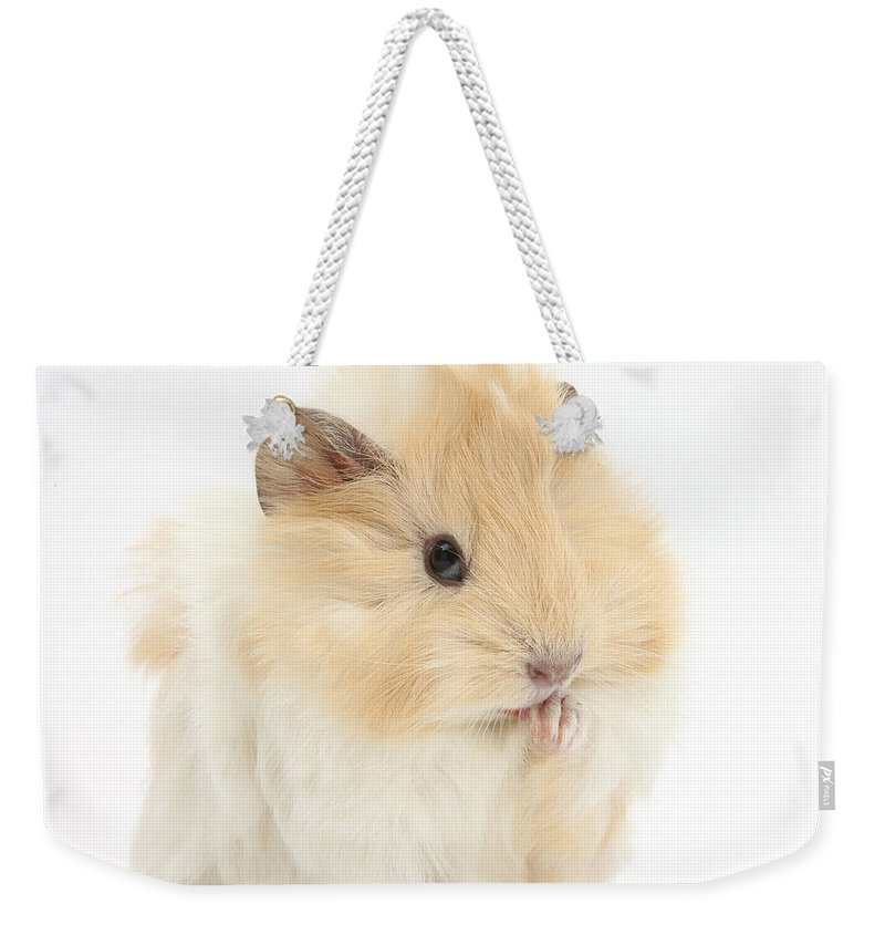 Animal Weekender Tote Bag featuring the photograph Guinea Pig Washing Paw by Mark Taylor