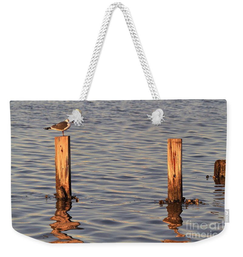 Gull Weekender Tote Bag featuring the photograph Gull At Sunset by Louise Heusinkveld