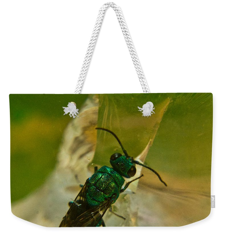 Wasp Weekender Tote Bag featuring the photograph Halicid Bee 12 by Douglas Barnett