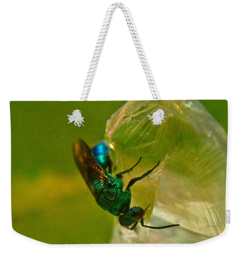 Wasp Weekender Tote Bag featuring the photograph Halicid Bee 20 by Douglas Barnett