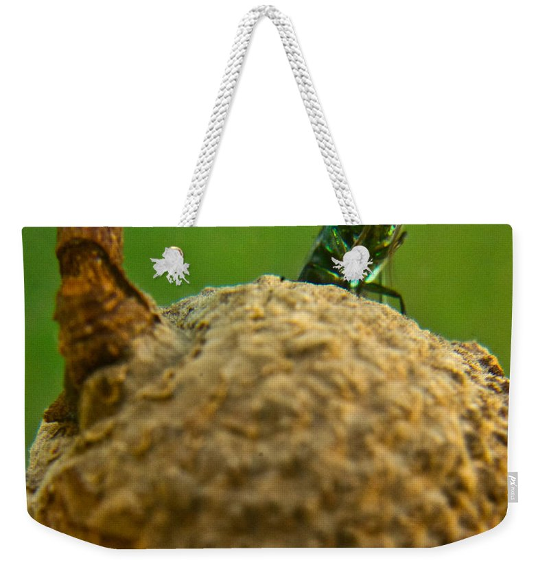 Wasp Weekender Tote Bag featuring the photograph Halicid Bee 21 by Douglas Barnett