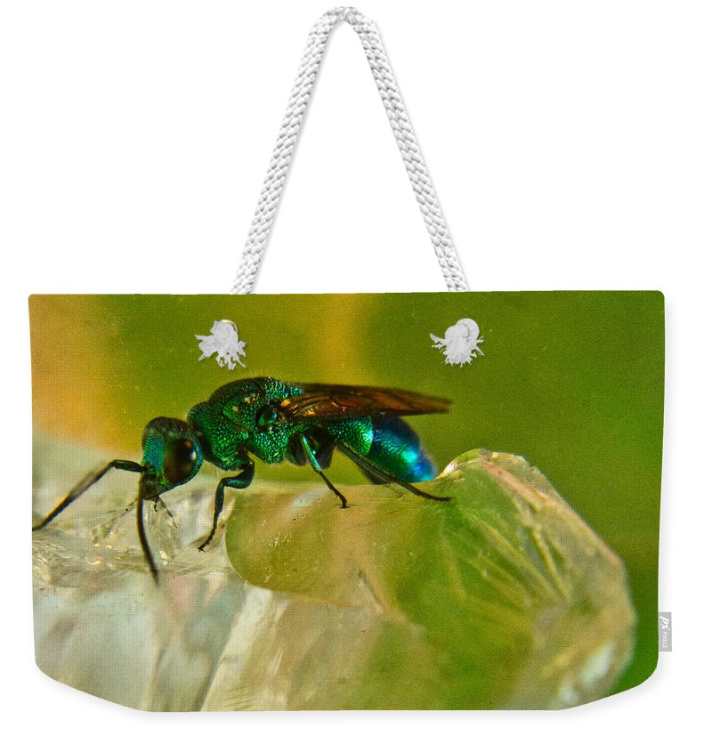 Wasp Weekender Tote Bag featuring the photograph Halicid Bee 22 by Douglas Barnett