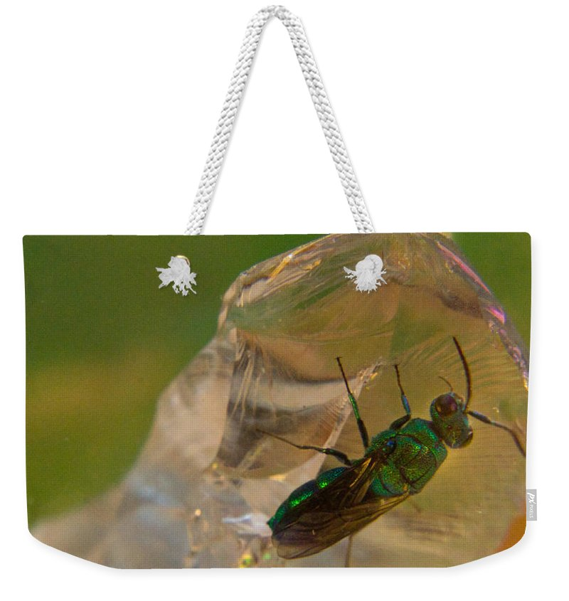 Wasp Weekender Tote Bag featuring the photograph Halicid Bee 7 by Douglas Barnett
