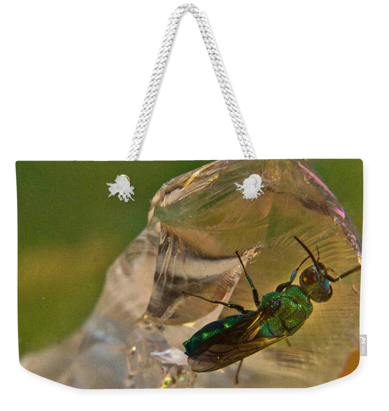 Wasp Weekender Tote Bag featuring the photograph Halicid Bee 8 by Douglas Barnett