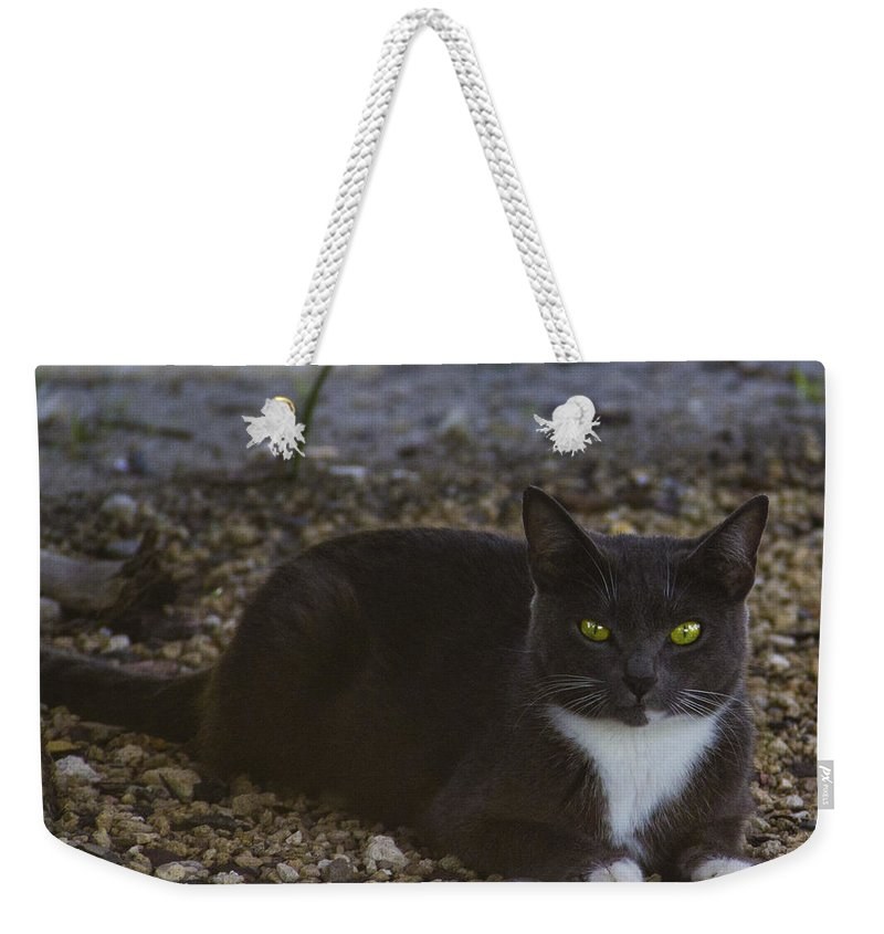 Cat Weekender Tote Bag featuring the photograph Hanging Out By The Creek by Roger Wedegis