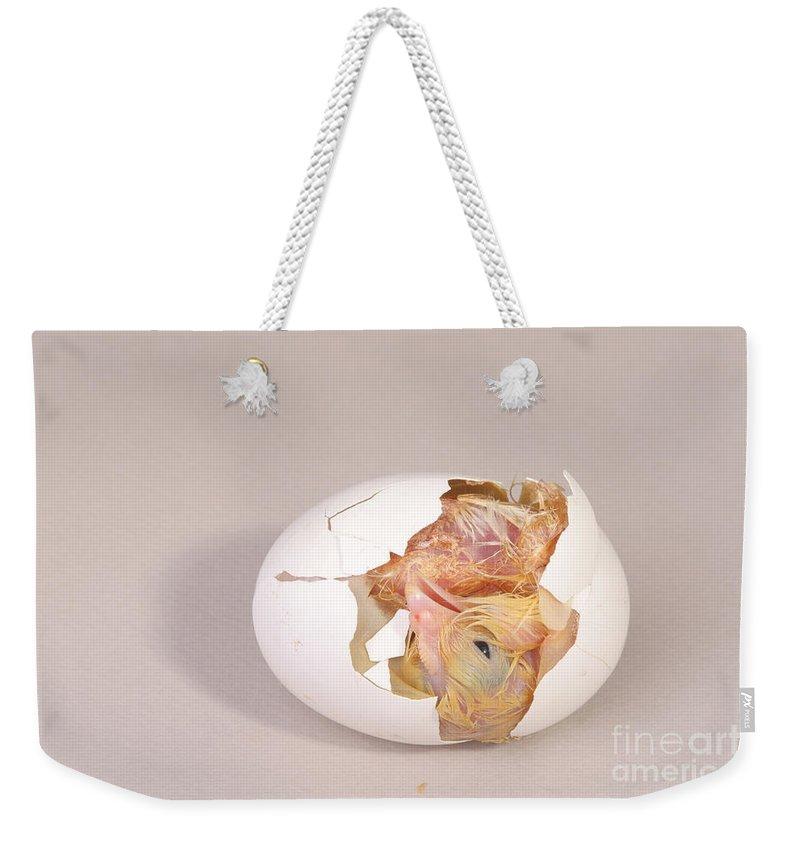 Egg Weekender Tote Bag featuring the photograph Hatching Chicken 10 Of 22 by Ted Kinsman