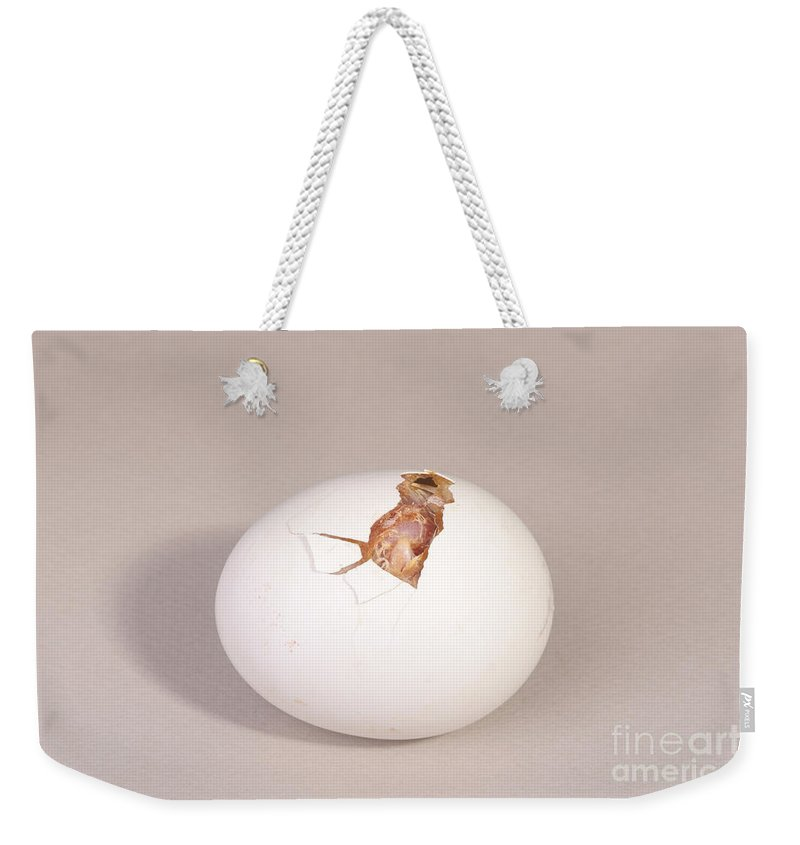 Egg Weekender Tote Bag featuring the photograph Hatching Chicken 5 Of 22 by Ted Kinsman