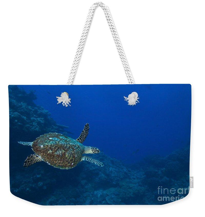 Cheloniidae Weekender Tote Bag featuring the photograph Hawksbill Sea Turtle, Kimbe Bay, Papua by Steve Jones