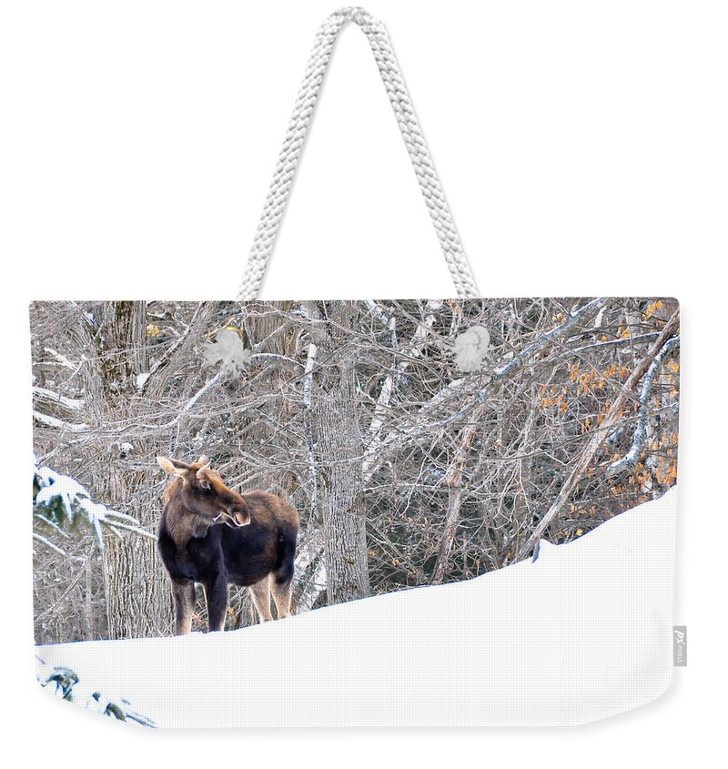 Moose Weekender Tote Bag featuring the photograph Hello Moose by Cheryl Baxter