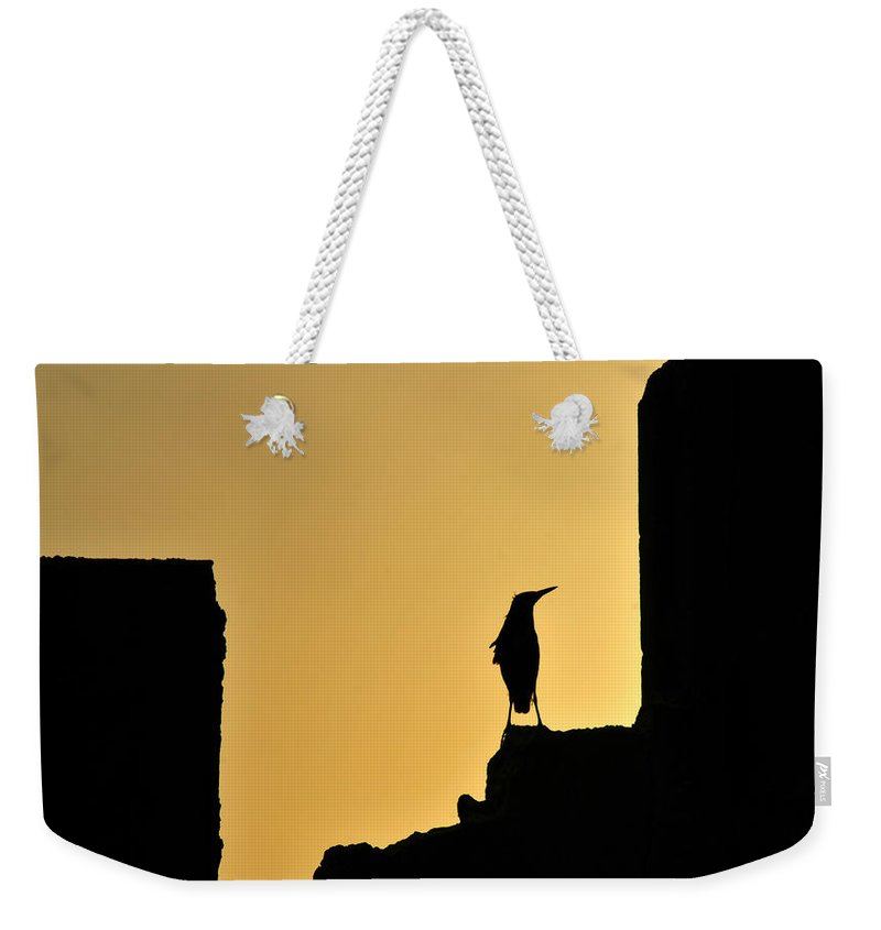 Fine Art Photography Weekender Tote Bag featuring the photograph Heron On Sea Wall by David Lee Thompson