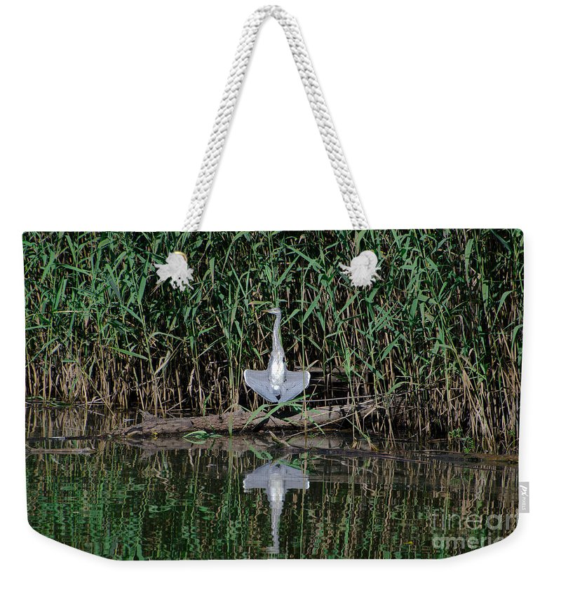 Heron Weekender Tote Bag featuring the photograph Heron Sunbath by Mats Silvan