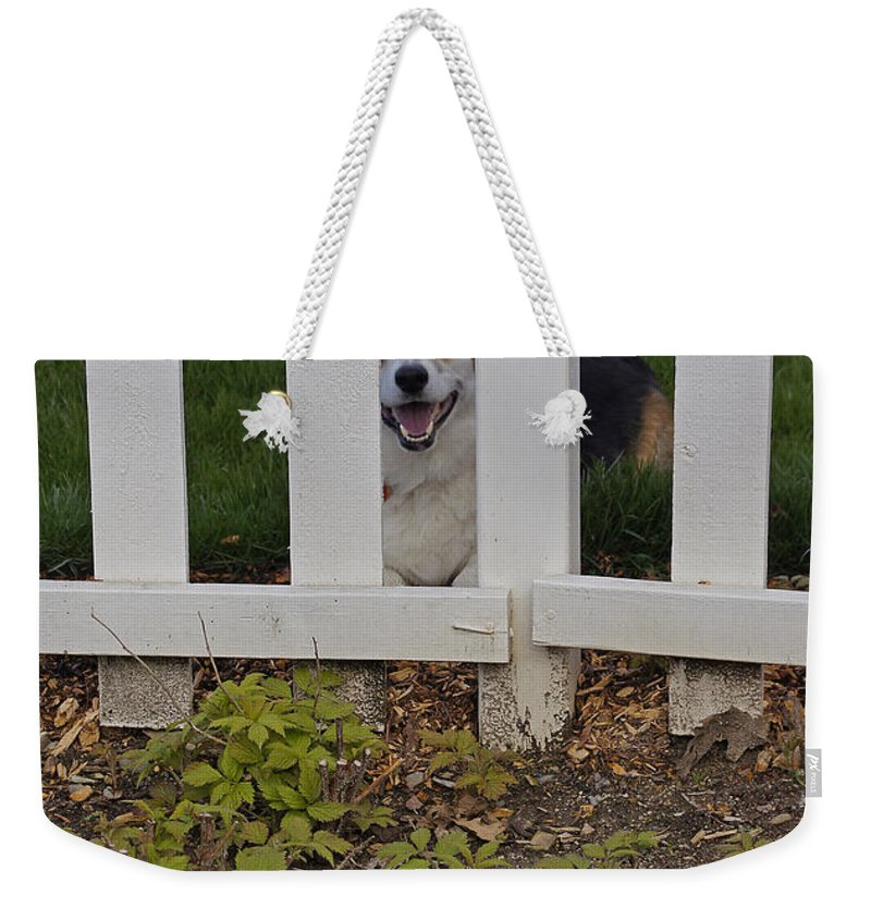 Johnny Weekender Tote Bag featuring the photograph Hey Gimme Da Ball by Mick Anderson