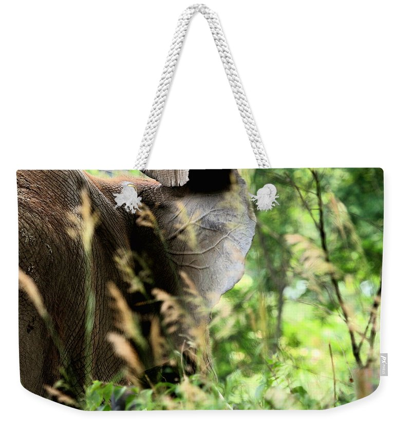 African Elephant Weekender Tote Bag featuring the photograph Hidden Patterns Blending In by Angela Rath