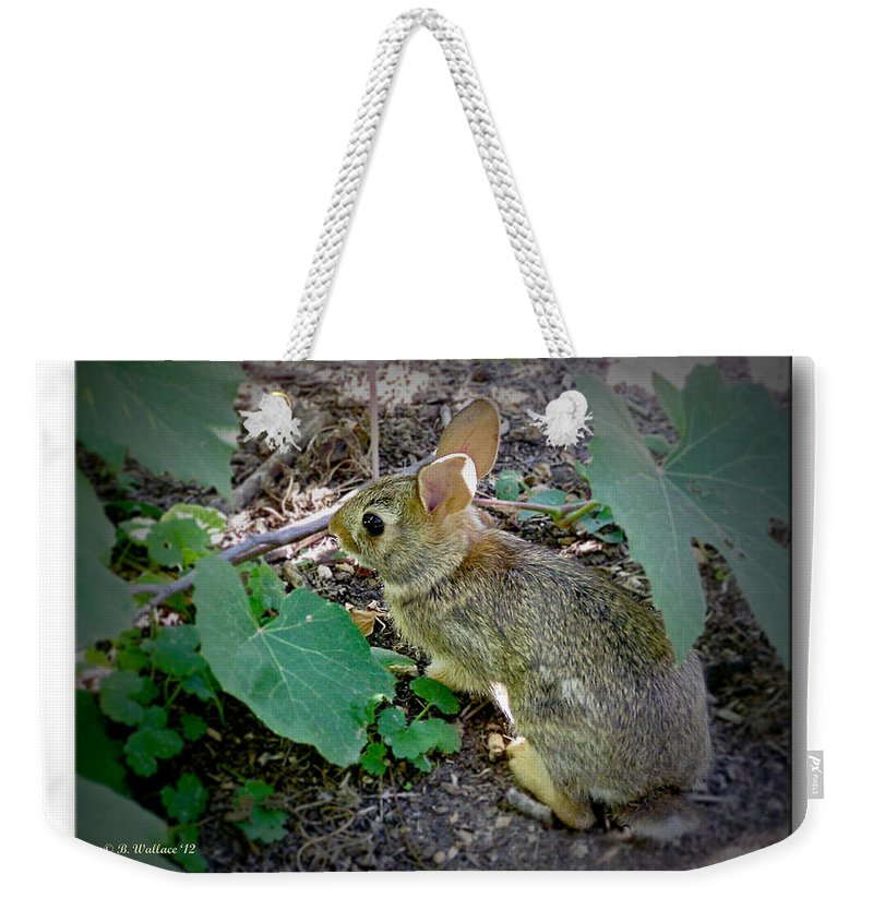 2d Weekender Tote Bag featuring the photograph Hiding In The Shadows by Brian Wallace