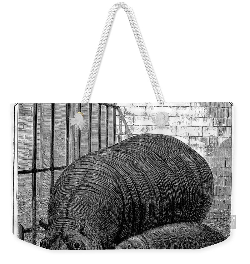1870s Weekender Tote Bag featuring the photograph Hippopotamus by Granger