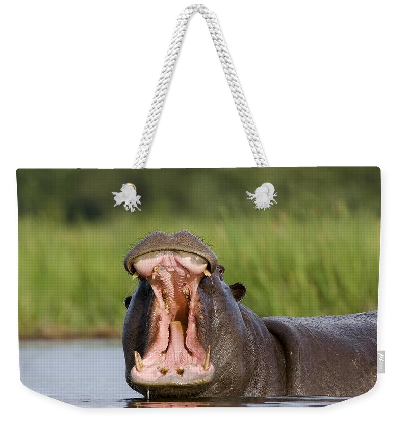 Mp Weekender Tote Bag featuring the photograph Hippo Displaying by Vincent Grafhorst