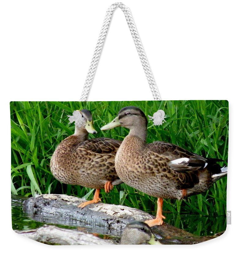 Ducks Weekender Tote Bag featuring the photograph Hokey-pokey by Lainie Wrightson