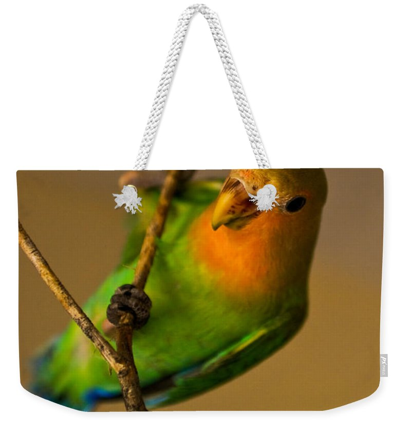 Love Bird Weekender Tote Bag featuring the photograph Holding Tight by Syed Aqueel