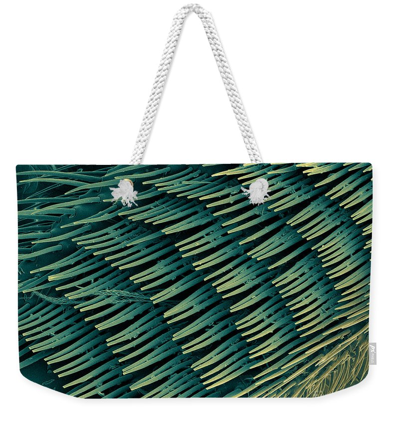 Nature Weekender Tote Bag featuring the photograph Honey Bee Leg, Sem by Ted Kinsman