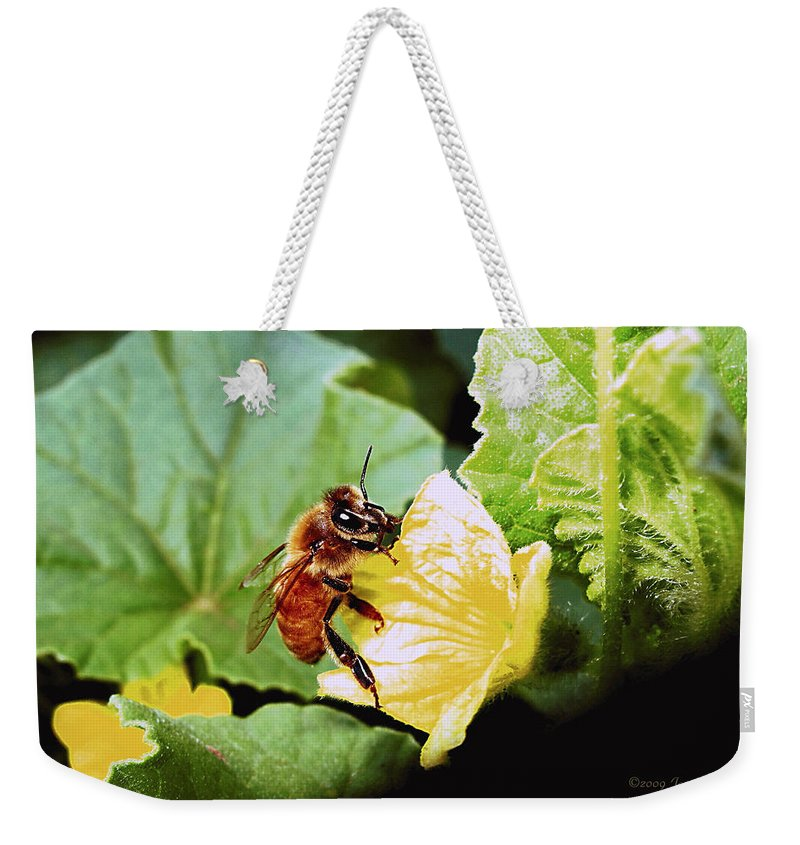 Bee Weekender Tote Bag featuring the photograph Honeybee And Cantalope by Joyce Dickens