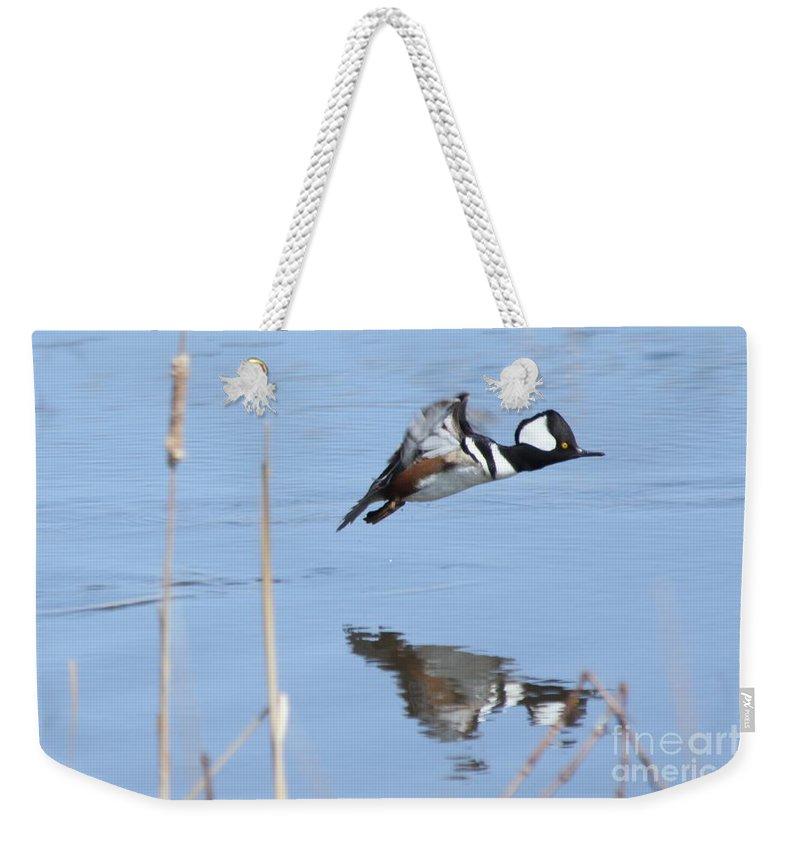 Hodded Weekender Tote Bag featuring the photograph Hooded Merganser Flying by Lori Tordsen