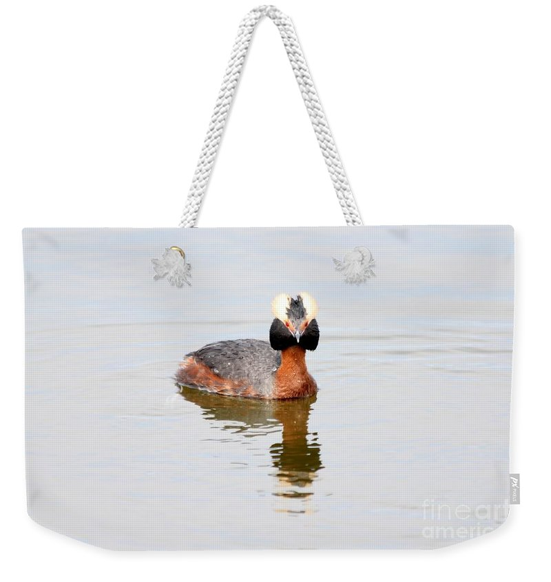 Grebe Weekender Tote Bag featuring the photograph Horned Grebe by Lori Tordsen