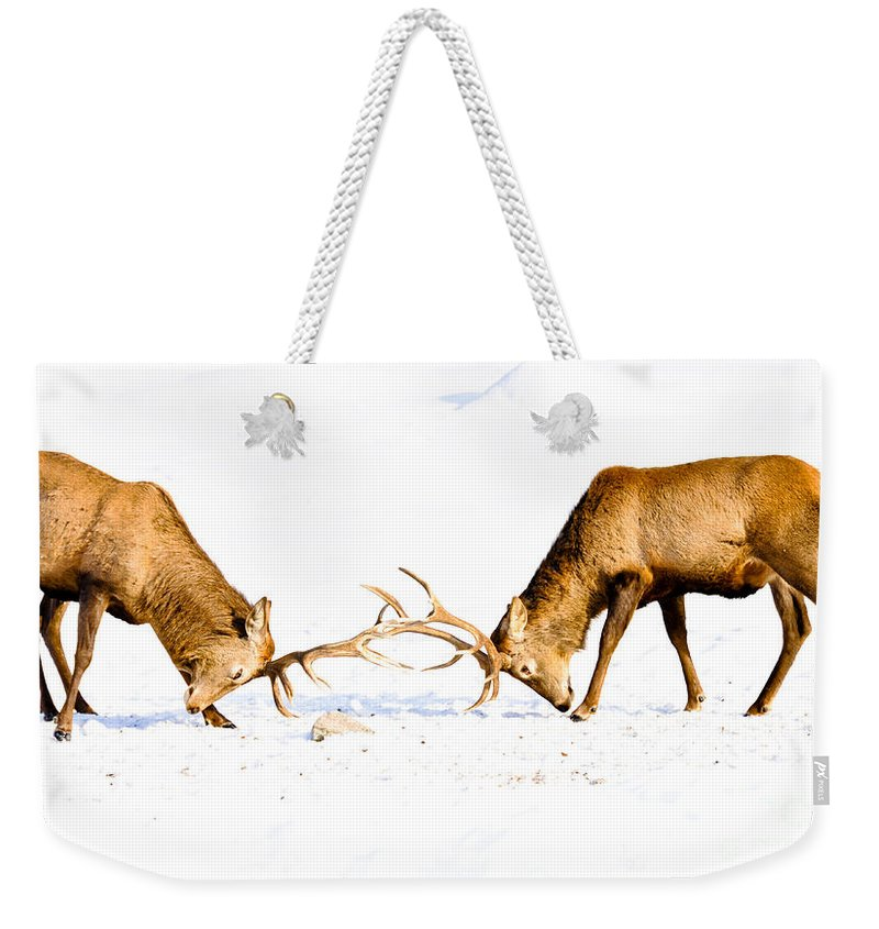 Wapiti Weekender Tote Bag featuring the photograph Horns A Plenty by Cheryl Baxter