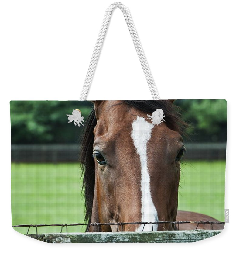 Thoroughbred Weekender Tote Bag featuring the photograph Horse by John Greim