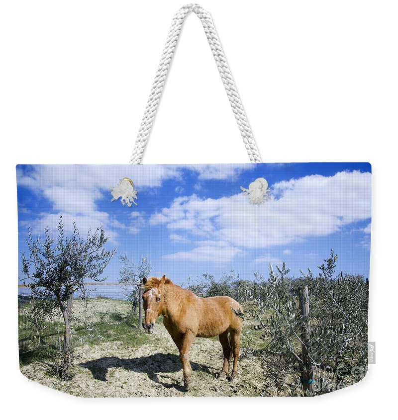 Horse Weekender Tote Bag featuring the photograph Horse by Mats Silvan