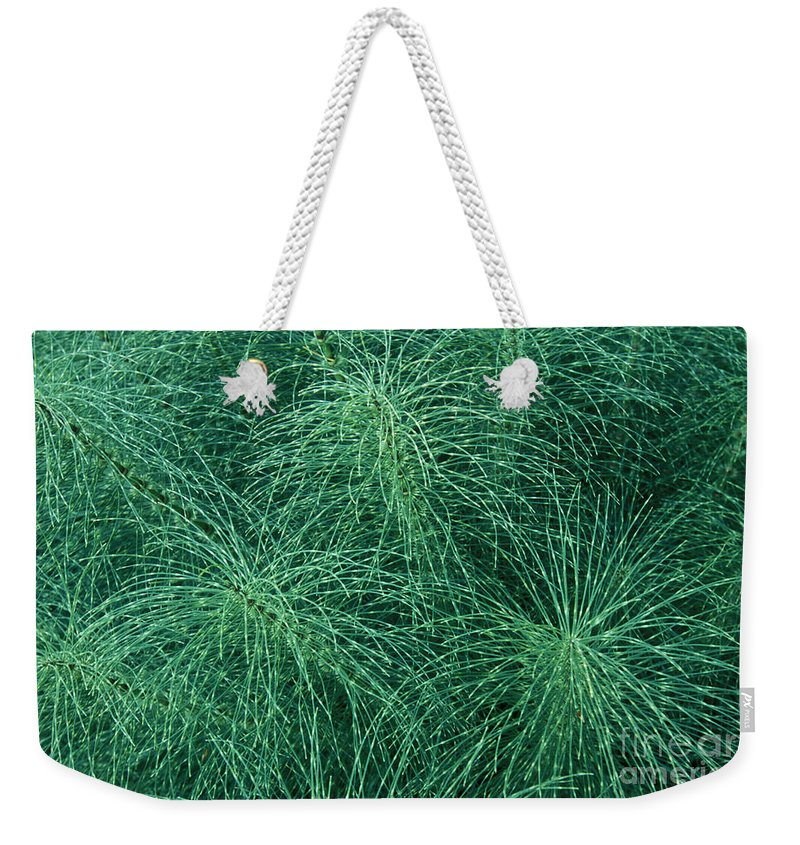Bronstein Weekender Tote Bag featuring the photograph Horsetail Fern by Sandra Bronstein
