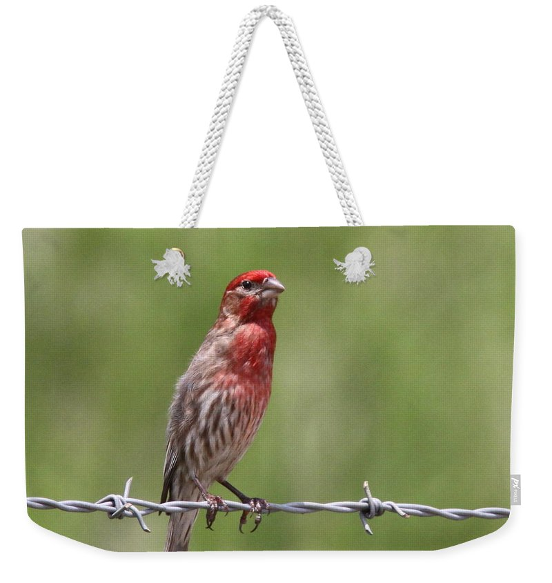 House Finch Weekender Tote Bag featuring the photograph House Finch - Content by Travis Truelove