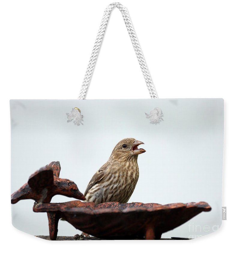 Finch Weekender Tote Bag featuring the photograph House Finch Eating Jelly by Lori Tordsen