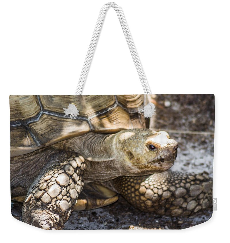 Turtle Weekender Tote Bag featuring the photograph How Old Am I by Shannon Harrington