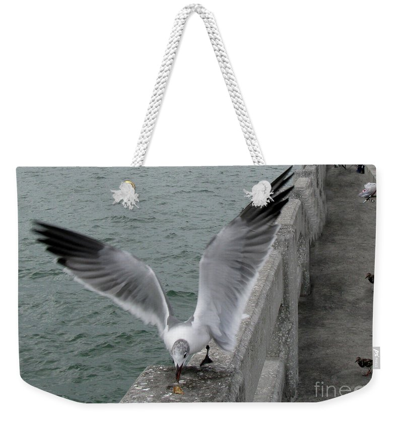 Birds Weekender Tote Bag featuring the photograph I Got Here First by Donna Brown