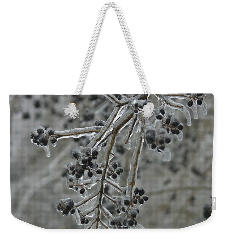 Weather Weekender Tote Bag featuring the photograph Ice- Coated Hawthorn Branch by Ted Kinsman