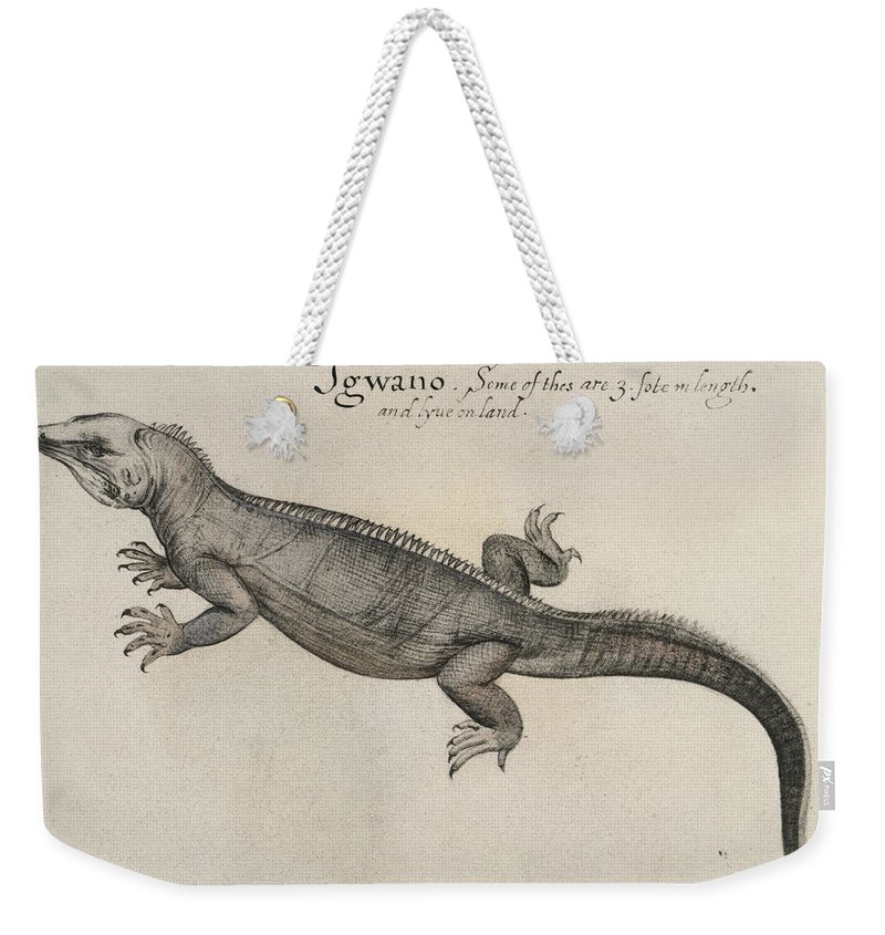 1585 Weekender Tote Bag featuring the photograph Iguana, 1585 by Granger