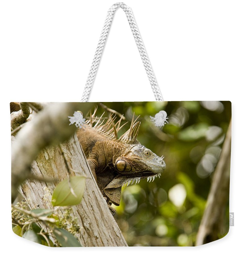 Iguanas Weekender Tote Bag featuring the photograph Iguana In Tree by Tim Laman