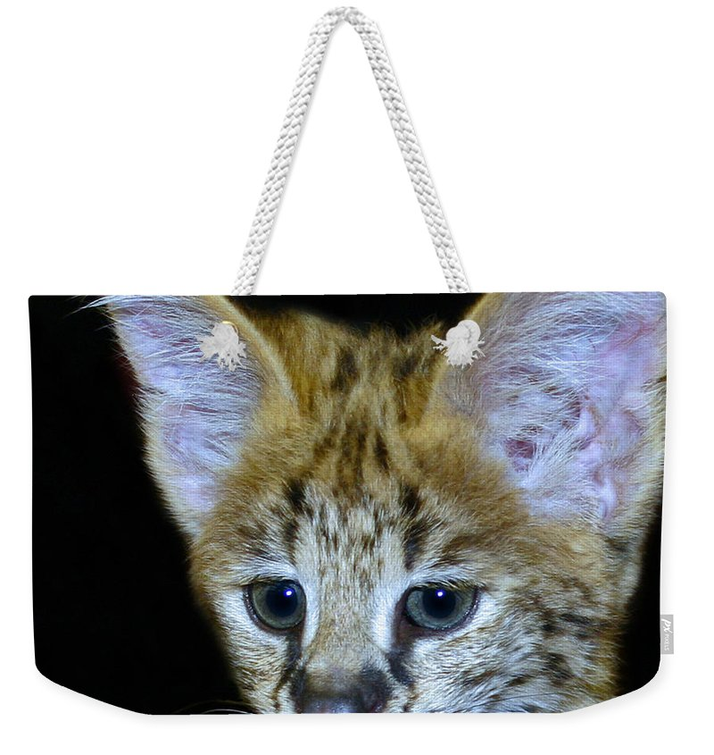 Serval Weekender Tote Bag featuring the photograph Im All Ears by Rebecca Morgan