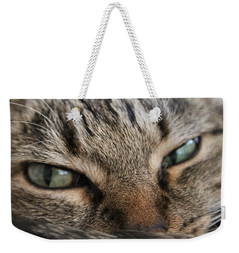 Cat Weekender Tote Bag featuring the photograph I'm Squishy by Catie Canetti