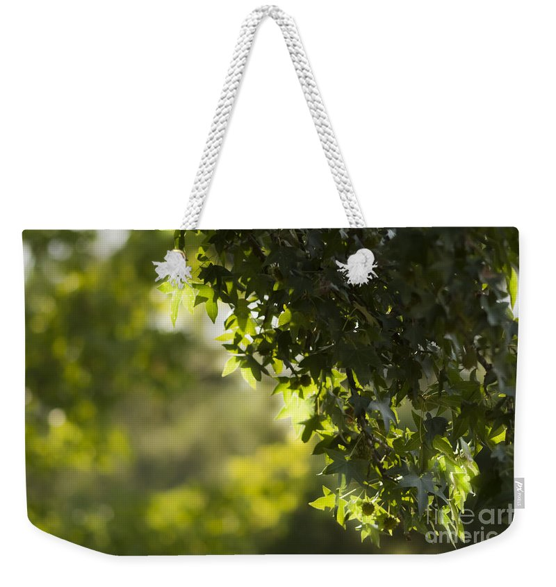 Tree Leaves Weekender Tote Bag featuring the mixed media In The Woods by Kim Henderson